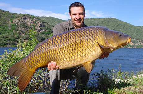 Dutch Red Worms catch Common Carp